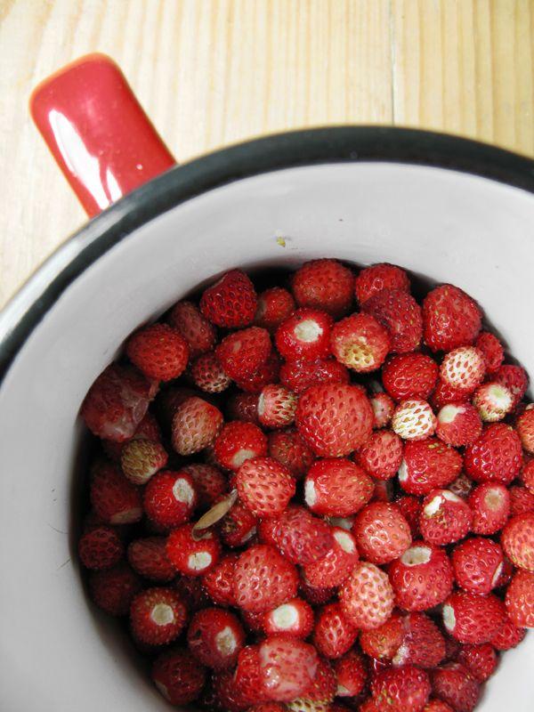 Άγριες φράουλες στην κούπα λίγο πριν το ζύγισμα τους