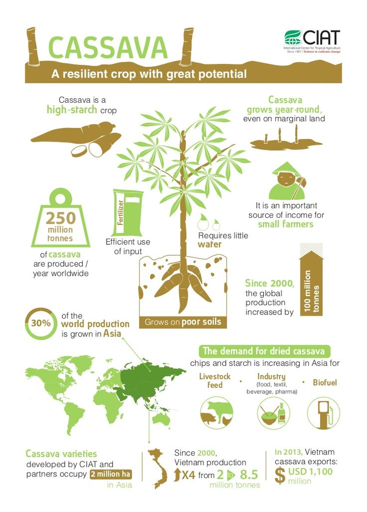 Did you know that demand for dried cassava is increasing for livestock feed, industry and biofuel? Cassava is a resilient, climate-smart crop. 1/3 of the world production is grown in Asia.