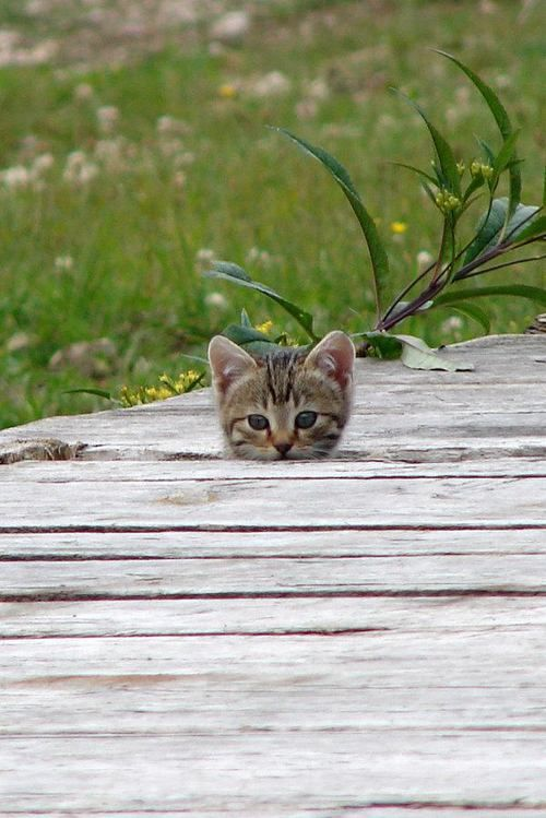 HACES SENTIR FELIZ Y SEGURO A TU GATO... O NO?? -Conozco las señales de dolor urinario, de infecciones o de cistitis. -Si mi gato orina en un lugar no acostumbrado, corro con él al veterinario. -Me tomo el tiempo para jugar con mi gato todos los días, incluso si estoy cansado o no tengo mucho ánimo. -Nunca olvido besar a mi gato para decirle adiós cuando salgo de casa. -Frecuentemente le traigo regalos a casa.  -Siempre mantengo cerrada la puerta de la lavadora.