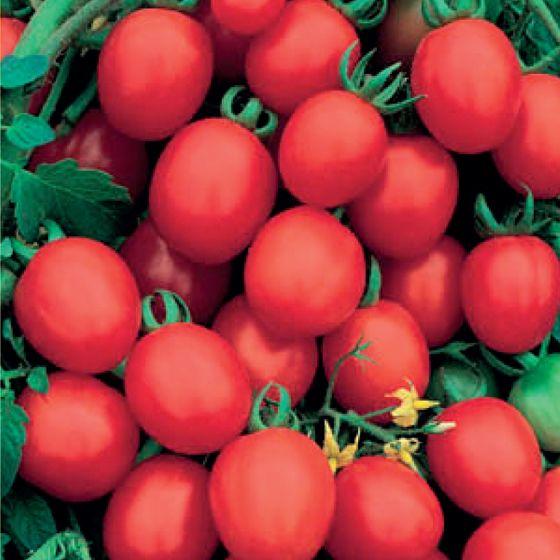 Sugar Plum Tomato