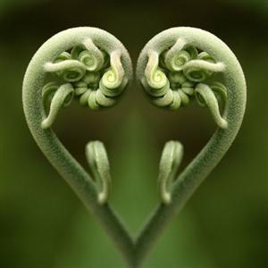 Garden Heart ~~Source: loveliegreenie