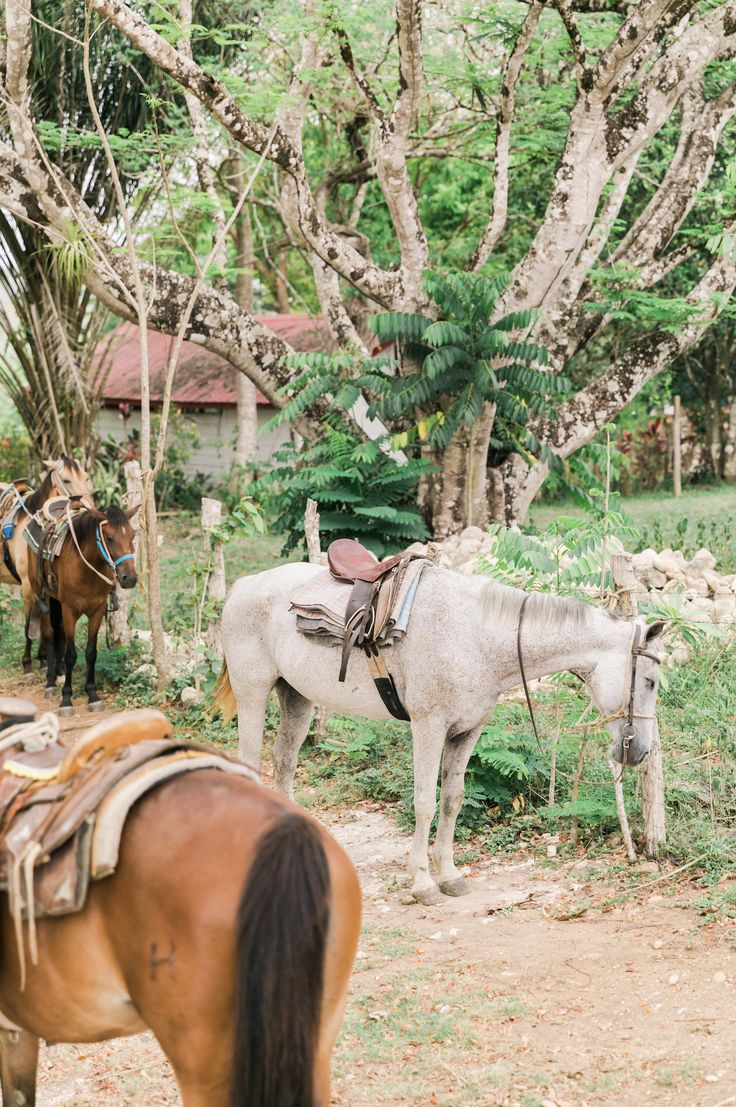 Our trusty steeds, ready to take guests on jungle adventures🐴  | Ka'ana Resort