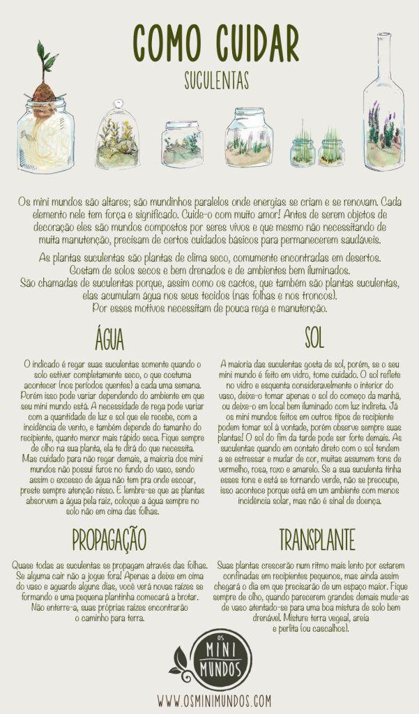 Como cuidar de suculentas: