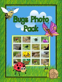 Bugs/Insects/Minibeasts Printable Photo Posters Pack