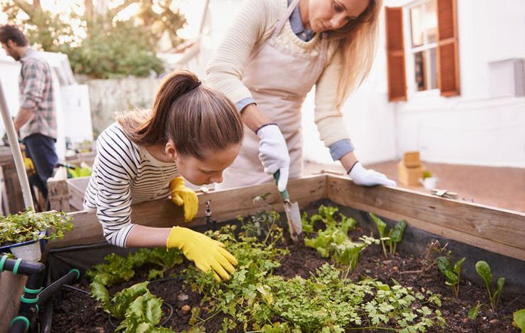 Practical ways to stretch your dollar when planting an organic herb garden.