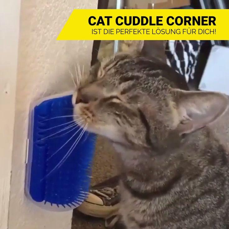 🐈😱 Streicheleinheiten für deine Katze 🙀😍