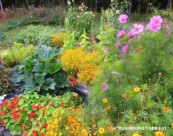 my garden summer 2014