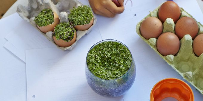 Why you need to sprout chia seeds, and how to do it - I Quit Sugar