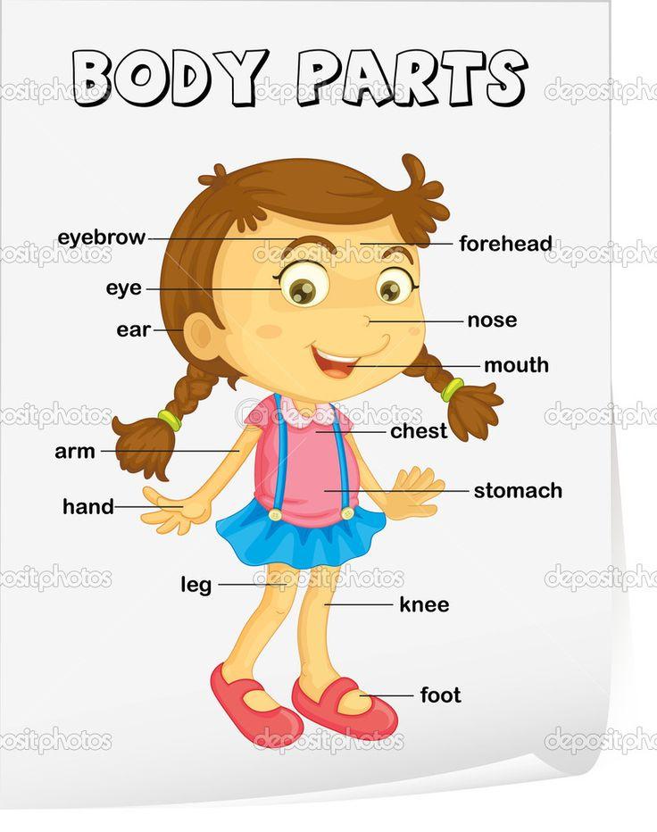 Okul Öncesi İngilizce Eğitimi http://www.canimanne.com/okul-oncesi-ingilizce-egitimi.html Vocabulary worksheet - parts of the body