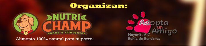 Patrocinadores Oficiales del Segundo Gran Festival de Halloween y Día de Muertos en Parabien Nuevo Vallarta
