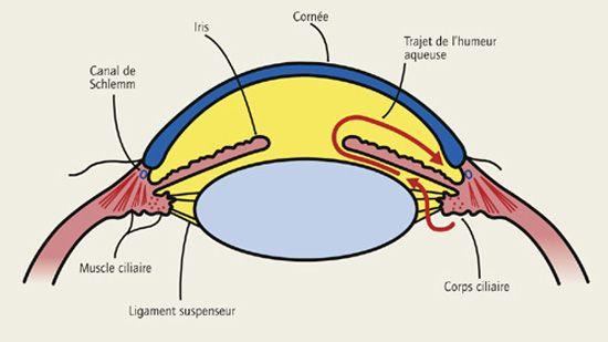 Glaucome: maladie oculaire provoquant lésions du nerf optique | LEEM - Les entreprises du médicament