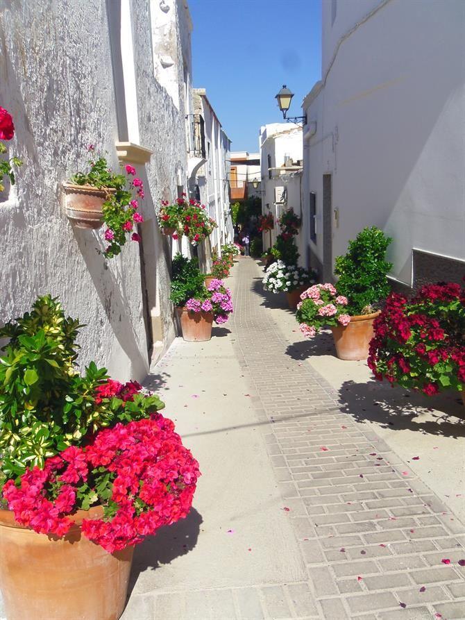 calle de Lucainena de las Torres pueblo de Almerìa en España. Este pueblo almeriense llega a la excelencia con la pulcritud en sus calles y viviendas blancas, decoradas con hermosas macetas que pintan como si de un lienzo se tratase este hermoso paraje.