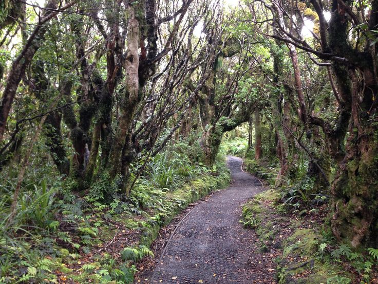 Goblin Forest, Mt Taranaki, New Zealand