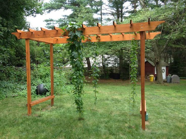 Hop Pergola Idea Gardening Pinterest Nice Home And