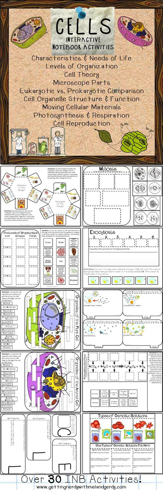 Over 30 interactive science notebook activities for cells! Characteristics and needs of life, levels of organization, cell theory, microscope parts, Robert Hooke, eukaryotic and prokaryotic cell comparison, cell organelle structure and function, osmotic solutions, cellular respiration and photosynthesis, mitosis, active and passive transport, and MORE!