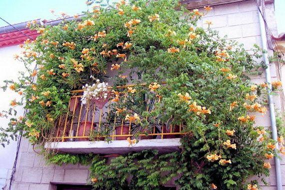 Κήπος Στα Μεσόγεια: Καταπληκτικές ιδέες σχεδιασμού για μικρά μπαλκόνια...