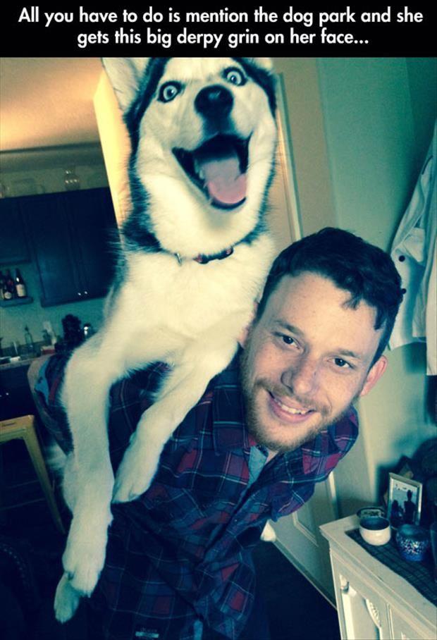 #Siberianhusky #dog