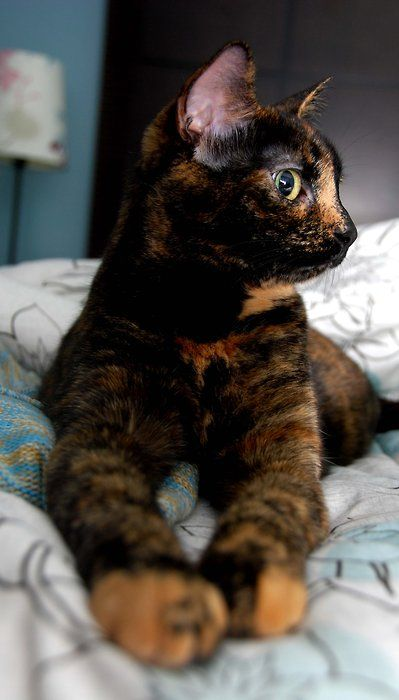 My cat looks just like this!