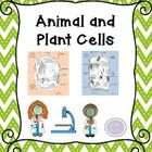 This packet includes diagrams to label, graphic organizers, and a quiz on plant and animal cells. Download the preview to take a peek at the conten...