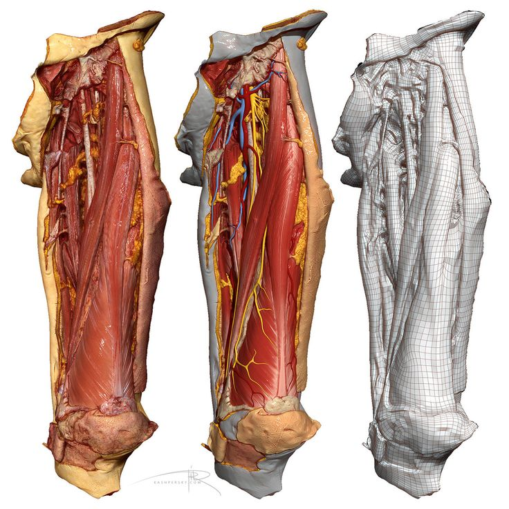 192 best Anatomy images on Pinterest | Anatomy reference, Sculpture ...
