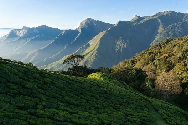 Travel & Adventures: Kerala ( केरल ). A voyage to Kerala state, India ( इंडिया ), Asia - Thiruvananthapuram, Kochi, Kozhikode, Kollam, Thrissur, Alappuzha, Palakkad, Kanhangad, Kottayam, Malappuram...