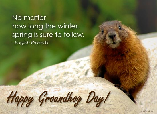 Is it spring yet? Happy #GroundhogDay, everyone! http://www.funnydam.com/picture-6872-groundhog-day-cards.html