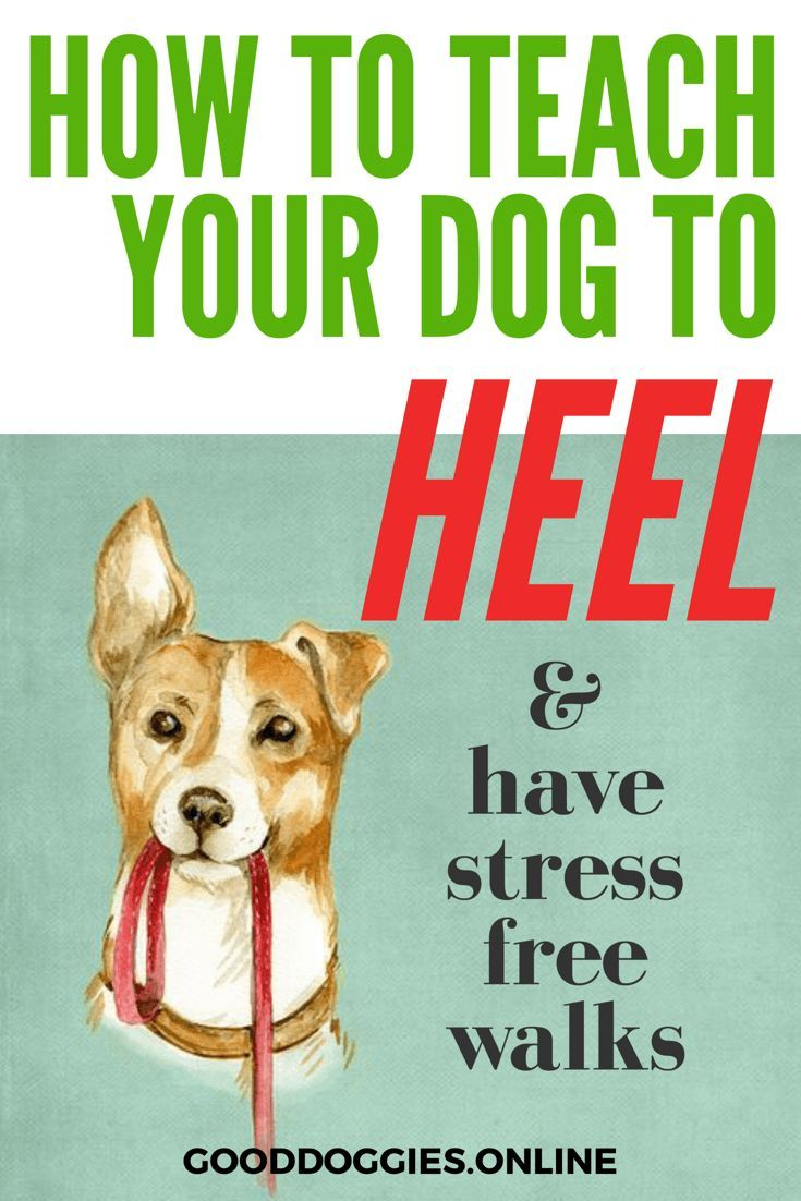 teaching a dog to heel