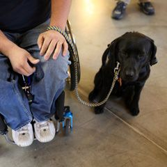 5 lesser-known facts about service dogs ... Can a pit bull be a service animal? And what's the story with those vests? ... This article has a few interesting tidbits about service dogs that you may or may not know. :-)