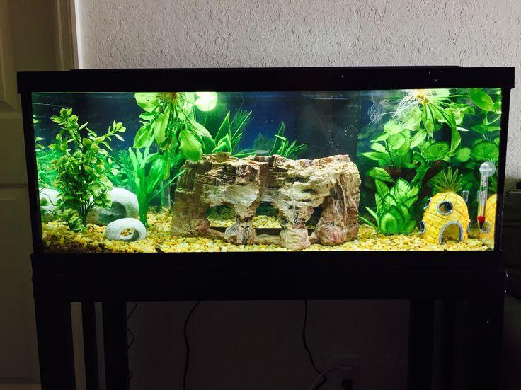 Just finished our new living room aquarium   Aquarium, New ...