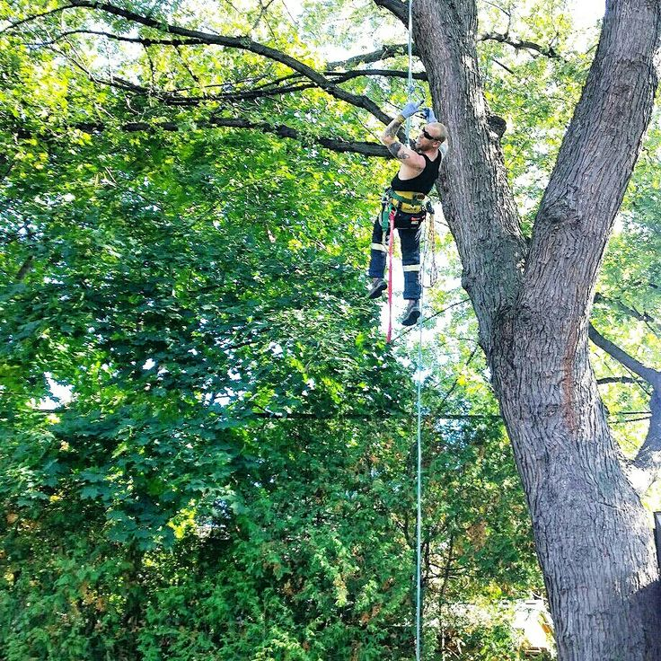 We go to great lengths to get the job done The Tree Care Specialist call now for a free estimate 647-545-8733