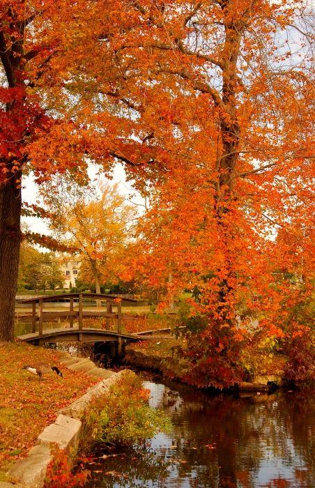 A Morning In Autumn - Lake Carasaljo, Lakewood, New Jersey