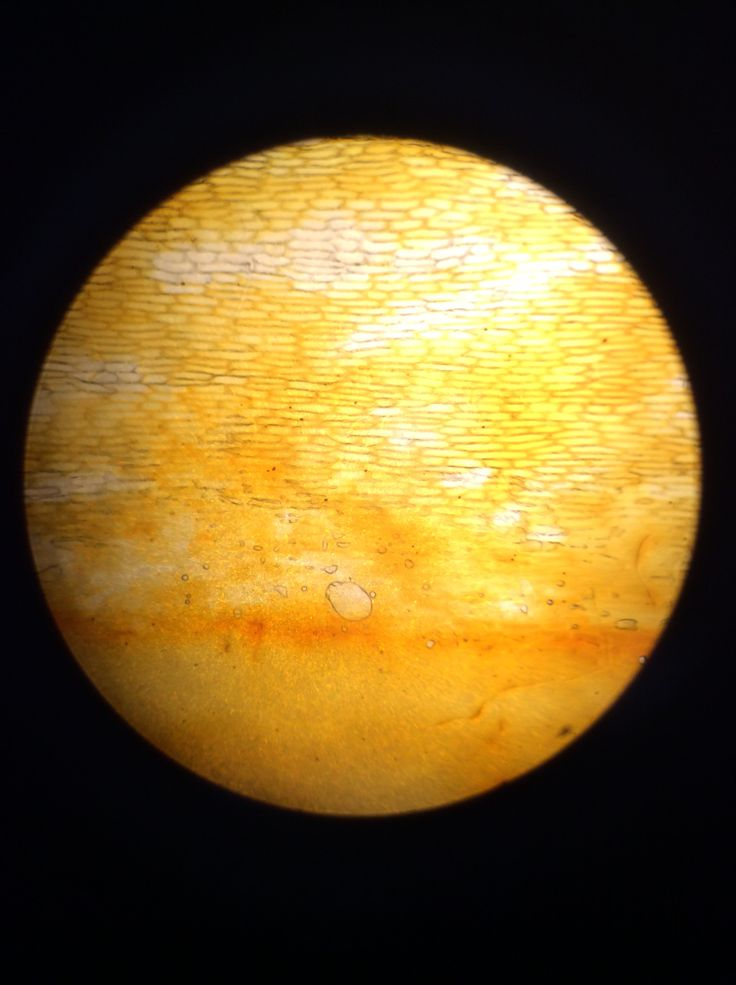 There they had it! The onion cell! (Photographed by:Felix, 6A)