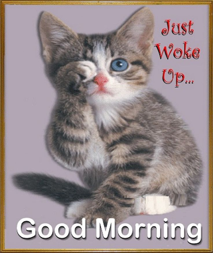 Good Morning Quotes Cat : Best images about kitty good morning on pinterest