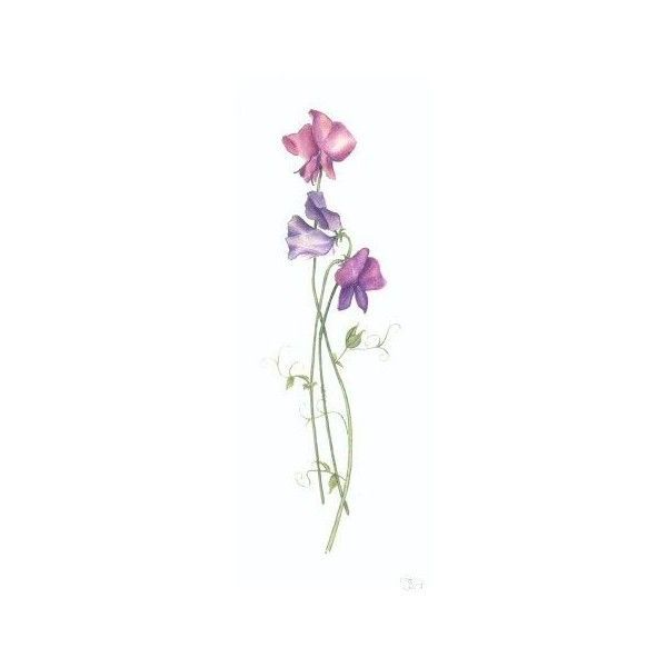 SweetPeas Tattoos Pinterest found on Polyvore featuring polyvore and flowers