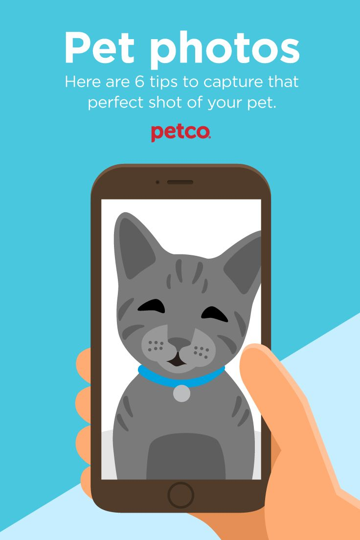 Say Cheese Tips On Taking The Purrfect Pet Photo Your Pet Pets Wet Cat Food