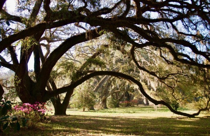 Soul-inspiring Lowcountry Plantation - https://blog.landflip.com #realestate #LANDFLIP #south #land