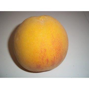 Fotos de Frutal Melocotonero Calanda en Maceta de 25 Cm en España - 3080455 - Agroterra