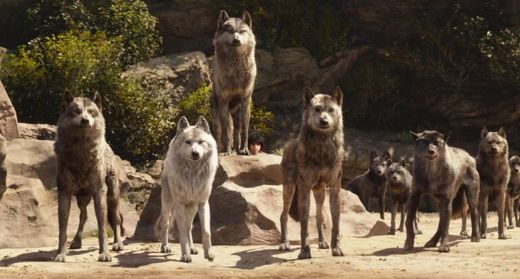 Raksha wolf , The Jungle book 2016 - Yahoo Image Search Results