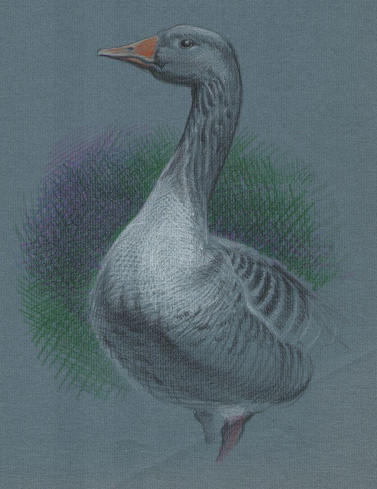 Goose / colour pencil /  / graphic art / illustration