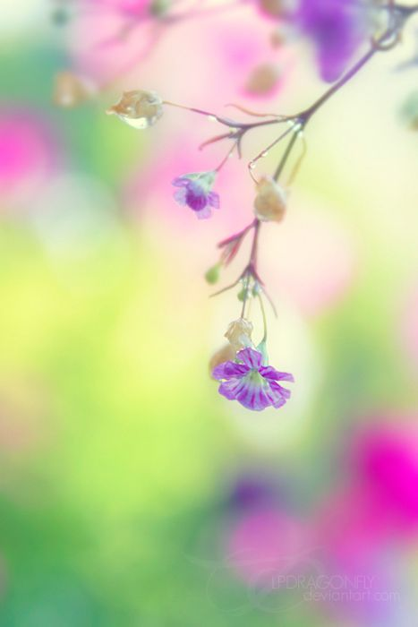 watercolors-intherain:  carry me away by ivadesign