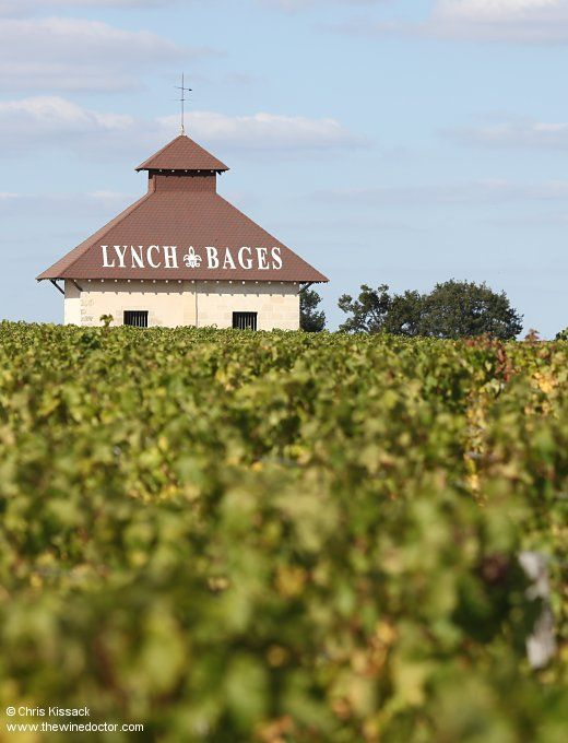 The vineyards of Château Lynch-Bages, close to Pauillac, October 2012