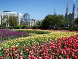 Venir au printemps pour le festival des tulipes