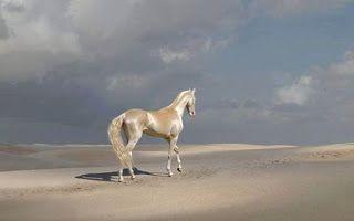 A foto mostra sob um céu azul claro com algumas nuvens, um imponente cavalo do Turcomenistão andando sobre dunas baixas em uma região árida e deserta. Sobre a pelagem quase dourada do animal incidem os raios de sol, evidenciando brilhos metálicos, como se Akhal Teke tivesse sido banhado em ouro. As patas são brancas e os cascos, no mesmo tom da pelagem. A cauda é volumosa, ondulada, longa, bem escovada com a extremidade ao vento. À esquerda, no chão arenoso, a sombra refletida.