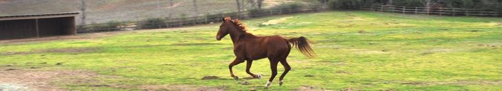 Spreading Manure on your pastures for a greener way to manage your barn!  proequinegrooms.com