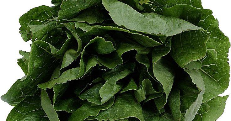 Tiempo de germinación para la espinaca. La espinaca también es utilizada como un ingrediente de ensalada fresca. Es un miembro de la oca o de la familia chenopodiaceae, junto con la acelga y la remolacha suiza. La verdura de temporada fresca prospera mejor en los períodos más fríos del año y es ampliamente utilizada tanto en sus formas frescas como procesadas. Las plantas de espinaca ...