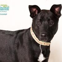Ventura County Animal Services - 75 Photos & 62 Reviews ... |Ventura County Animal Services