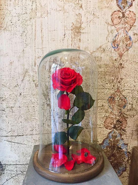 Flor Zen, floristería, Málaga, rosas eternas, ramos de novia   ROSA BELLA Y BESTIA