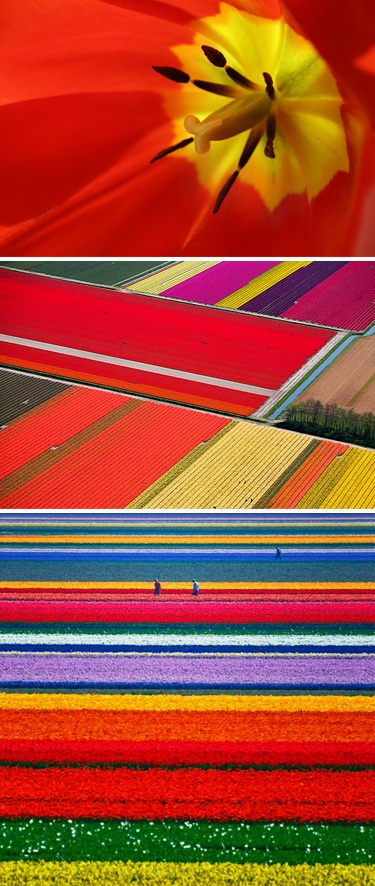 Tulip fields — Netherlands.  So beautiful.  One day I will see this in person.