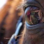 Equishop blog - Blog sklepu jeździeckiego