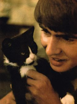 Davy Jones, The Monkees with another cat.